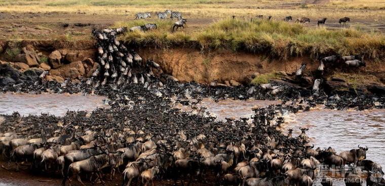 肯尼亚动物大迁徙之
