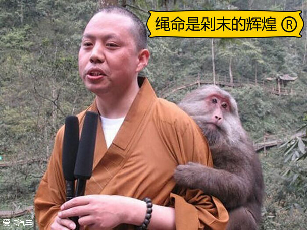 猴子图片大全可爱现实
